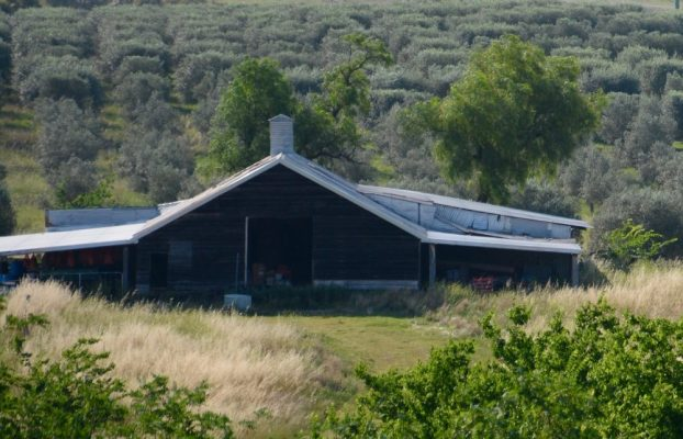 Elmswood Farm located in the Upper Hunter Valley of NSW in Australia.
